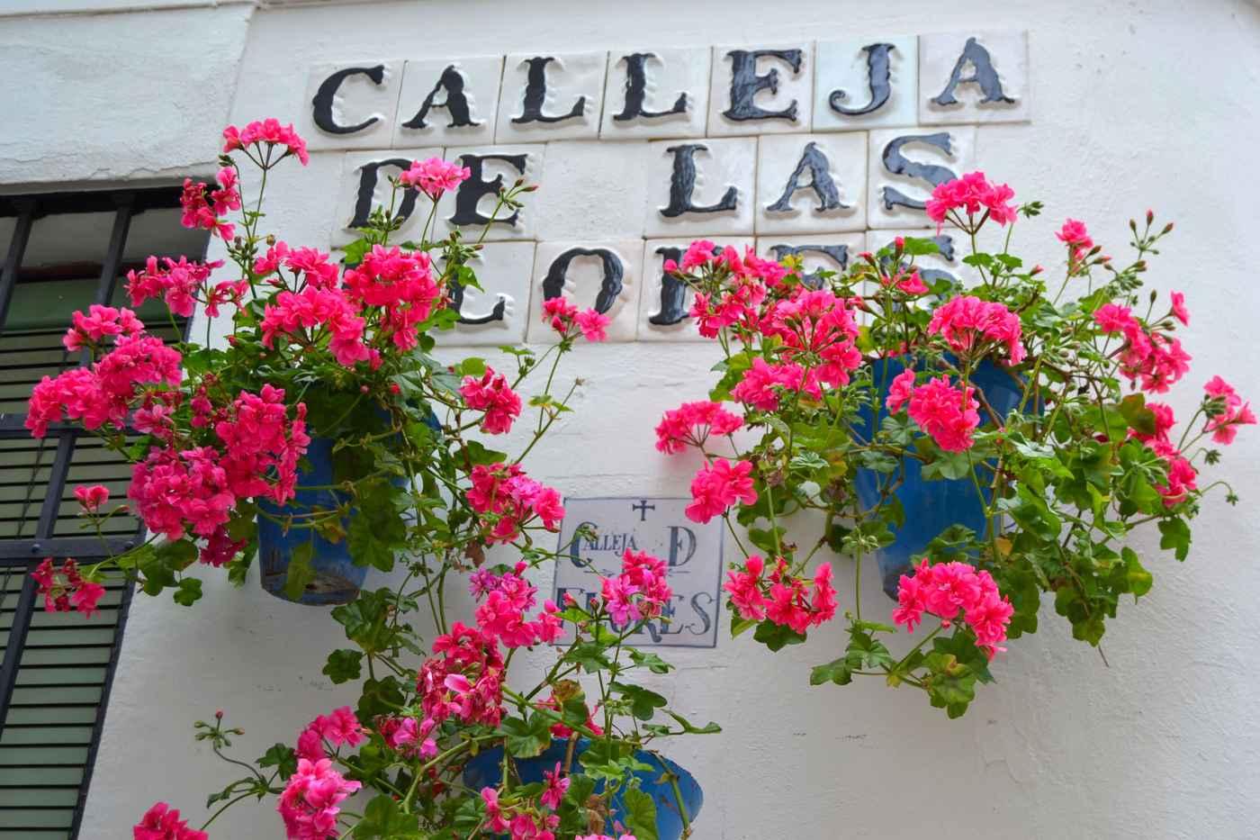 Fiesta de los patios de c rdoba tradiciones y fiestas espa a fiestas y tradiciones de espa a - Imagenes de patios andaluces ...
