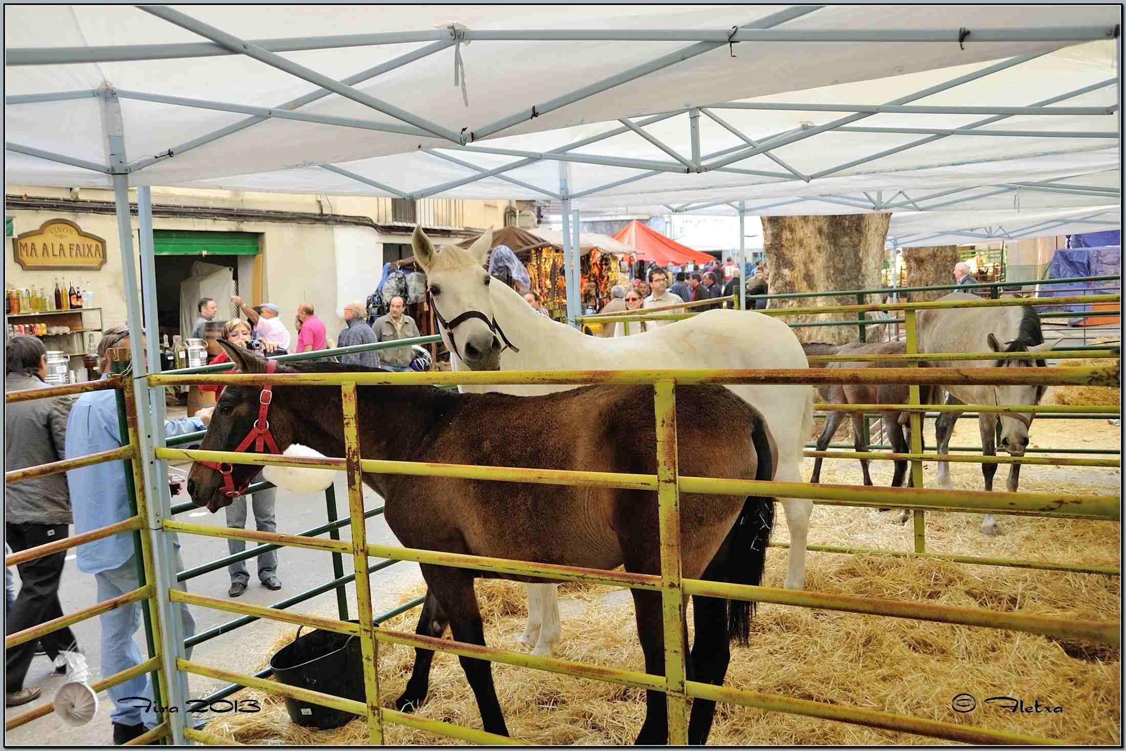 Feria de todos los santos de cocentaina tyf fiestas y - Cocentaina espana ...