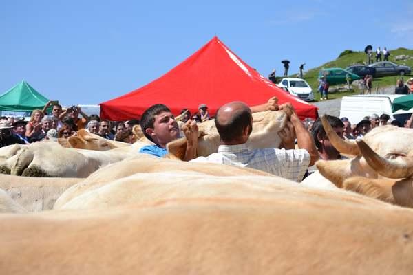 tributo tres vacas - Collado de Ernaz - Isaba - Rito - imagen1