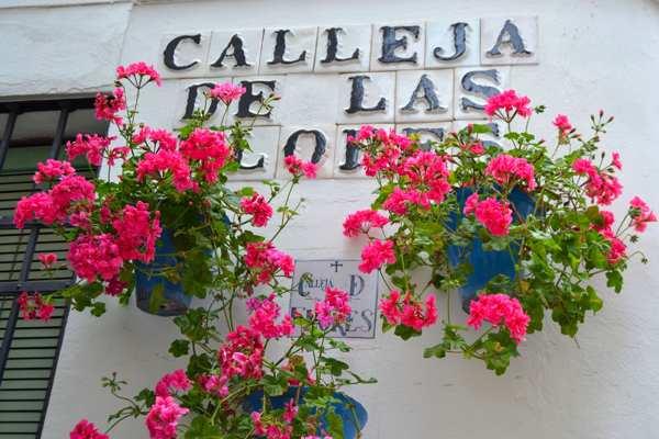 Festival de los Patios de Córdoba-Fiesta-Andalucia-imagenblog3