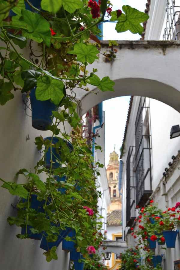 Festival de los Patios de Córdoba-Fiesta-Andalucia-imagenblog4