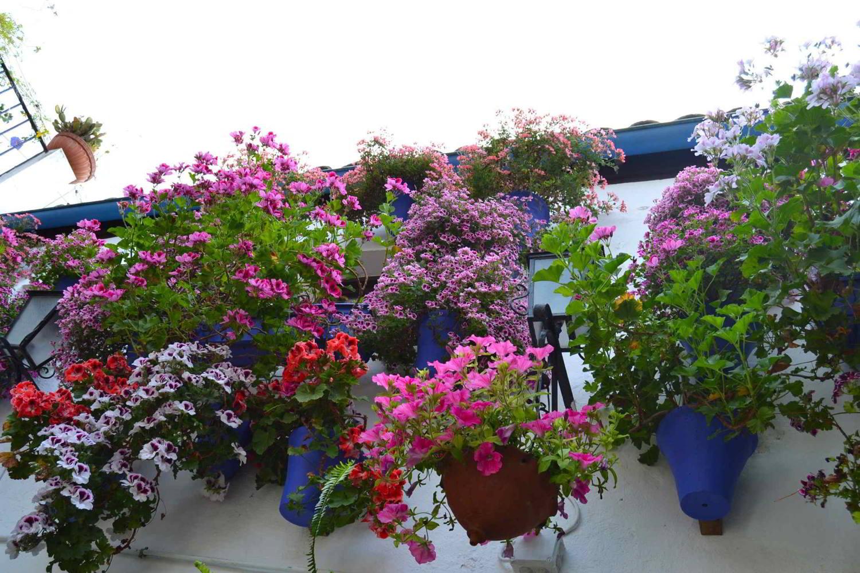 Festival de los Patios de Córdoba, donde viven las flores.