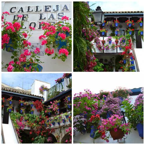Visita guiada a los Patios de Córdoba - tradición - imagen1