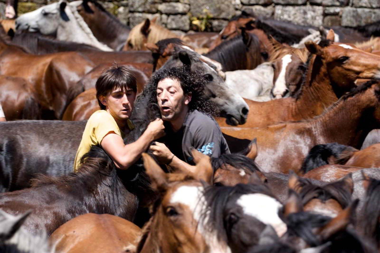 Caballos Salvajes, seguramente el mejor documental sobre «A Rapa Das Bestas»
