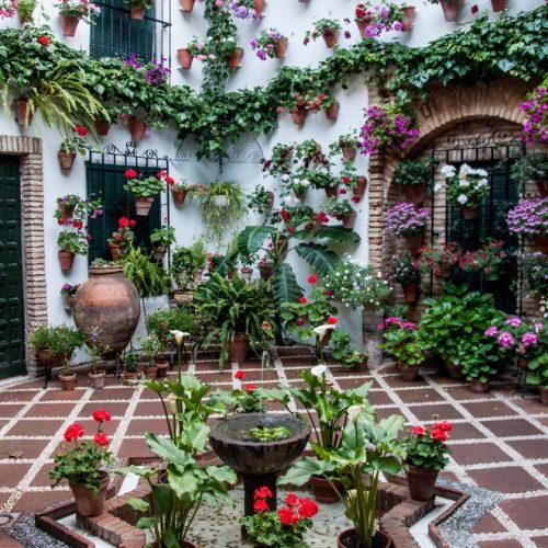 Tour Patios de Córdoba - Visita Guiada - Tradición - imagen1