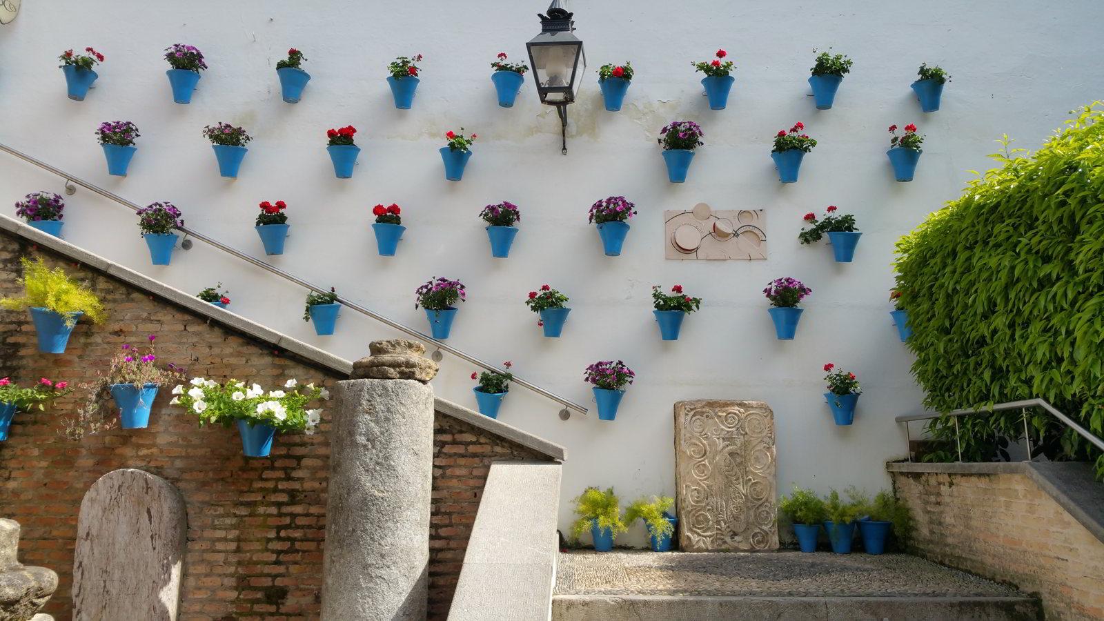 Descubre los Patios de Córdoba con un guía local